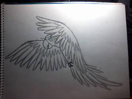Segundo dibujo papagayo 1 by IloveWKever