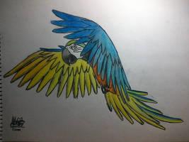 Segundo dibujo papagayo 2 by IloveWKever