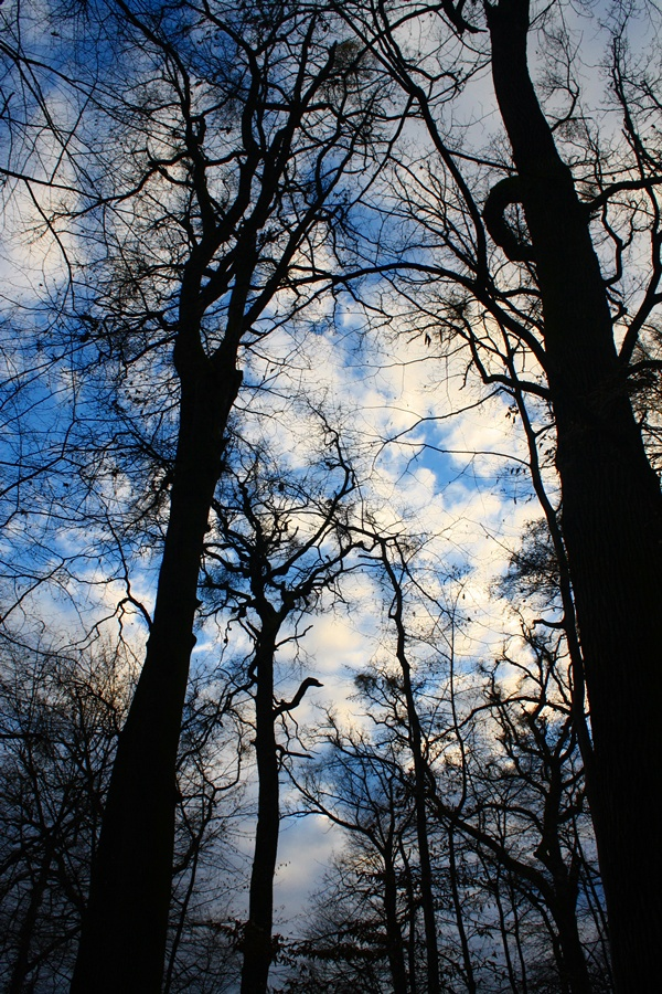 oh tree ohh sky by pticjavijuga02
