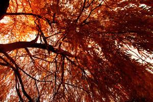 Autumn's Magic by WinterDruidess