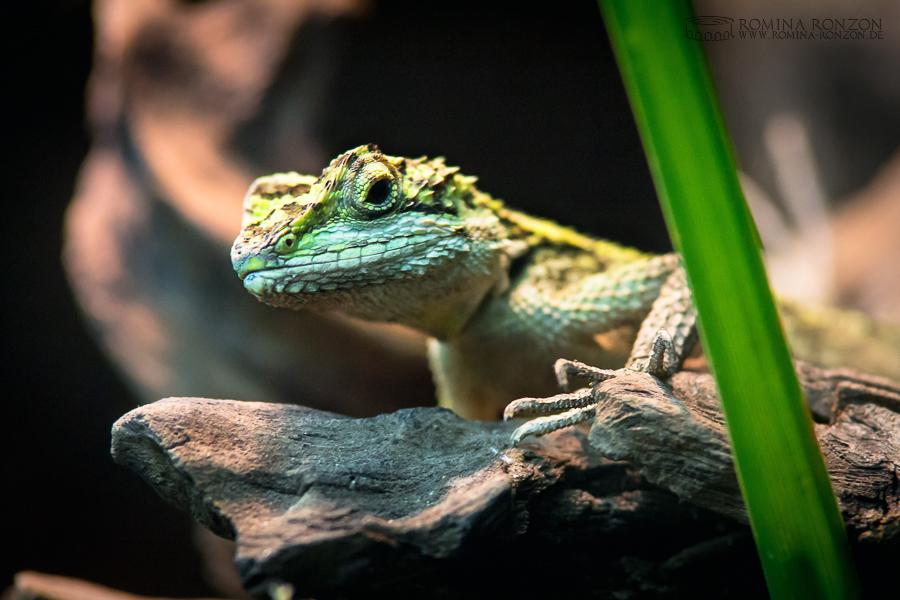 Lizard Watching by toteZitrone