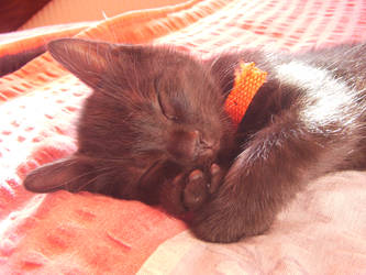 Cat by distandi