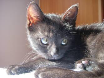 Cat.. by distandi