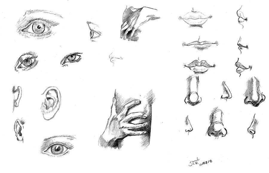Sketches - Body Parts By Celebri-ian On DeviantArt
