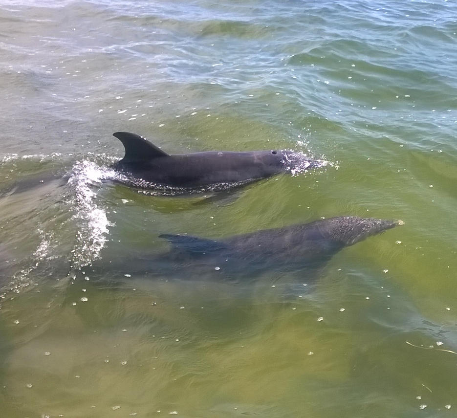 Dolphins! by Nesariel