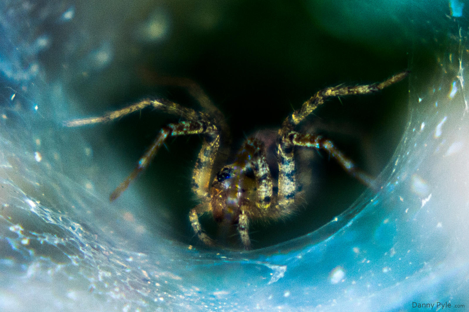 Funnel Web Spider by dannypyle
