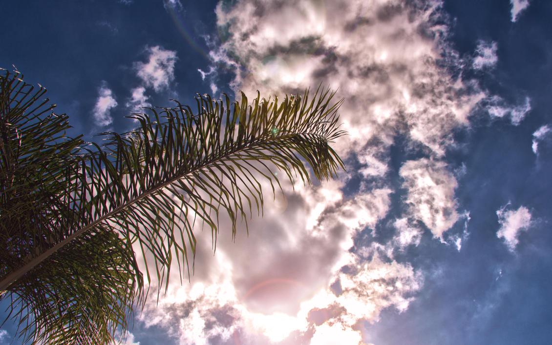 Sunny California by dannypyle