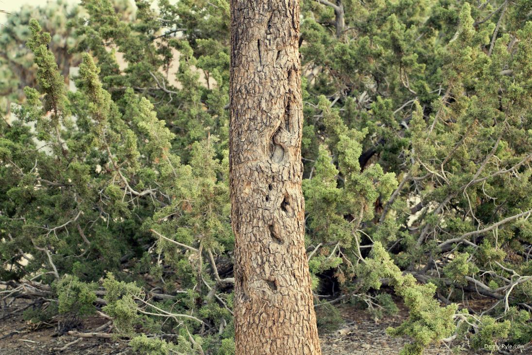 Joshua Tree Bark by dannypyle