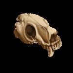 Timeworn Skull