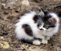 Kitten II by Phoenix-Gurl