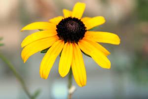 yellow petals :) by whisperVeronika
