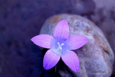 purple soul :) by whisperVeronika