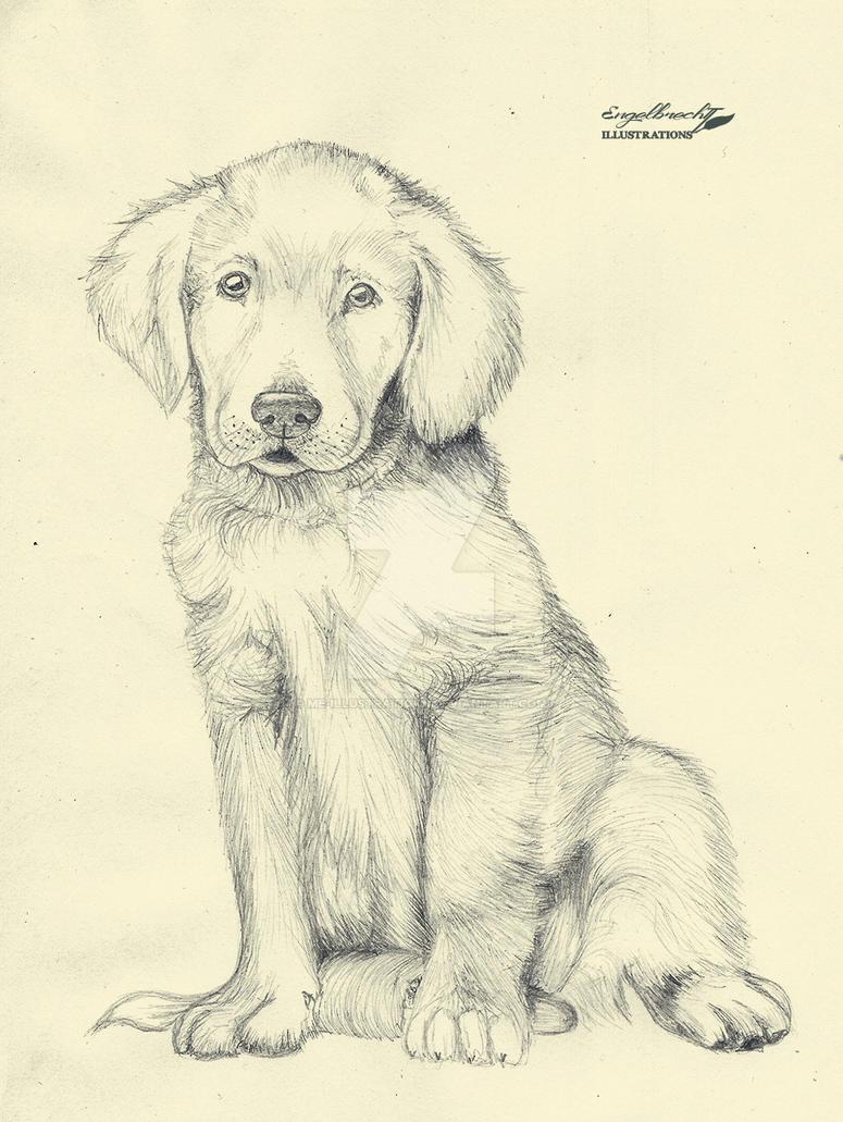 Golden Retriever Puppy By Me Illustrations On Deviantart