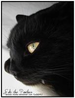 Saki The Panther -BewareOfHim- by beyond-frames