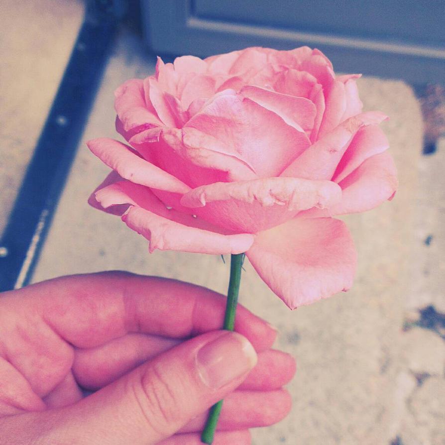 pinky rose by lu-wolf