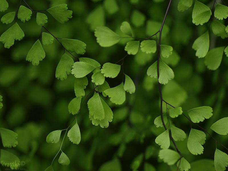 Leaves by Krasska