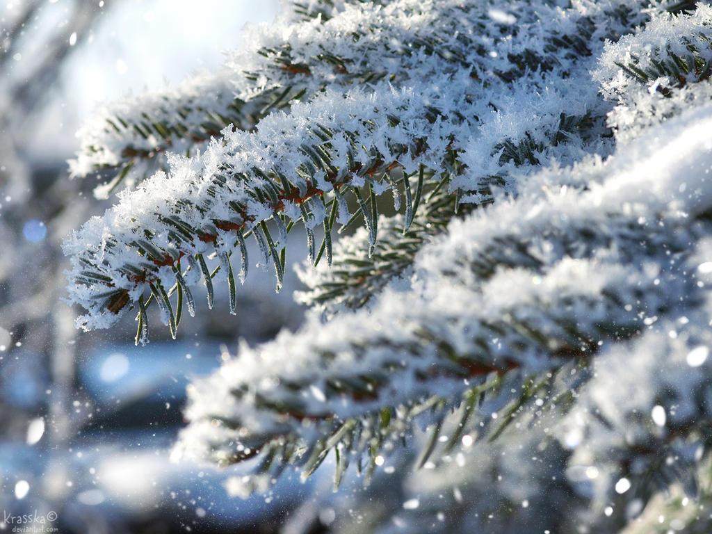 Winter by Krasska