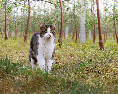 Fluffy cat in the apple orchard
