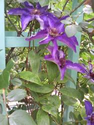 Bright purple flowers by melusineblack