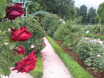 Garden path 2 by melusineblack