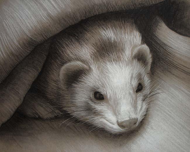 Art for Animals 02 by ladyalita