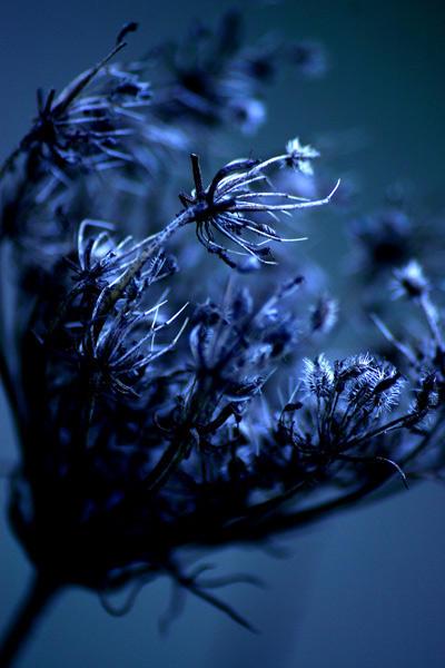 autumn spur by Neurotrash
