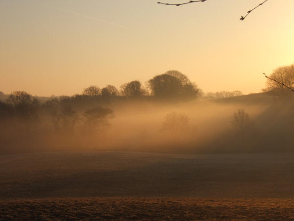 Morning Mist, unploughed field