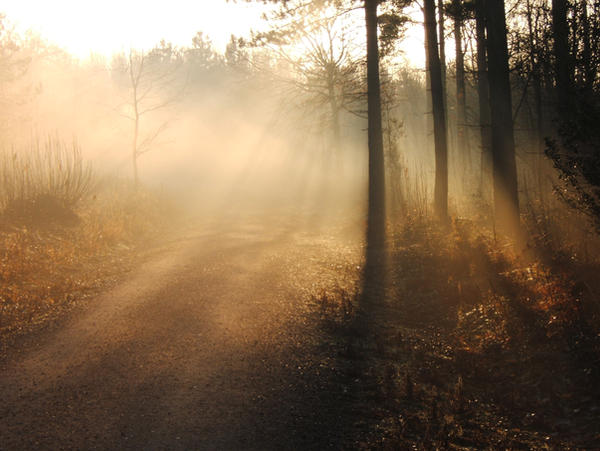 Mist Rays through trees