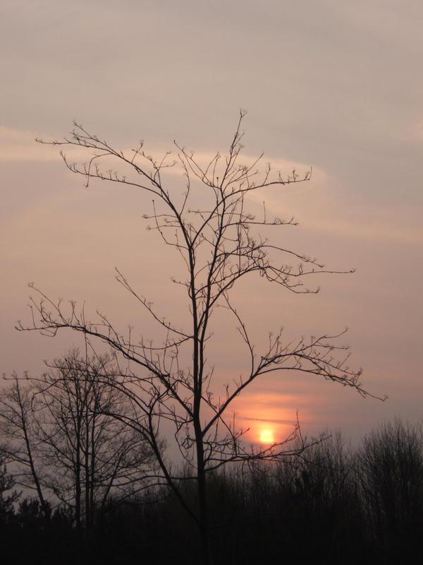 Sheltered sunrise