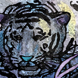 Tiger no.3 The Picasso Tiger