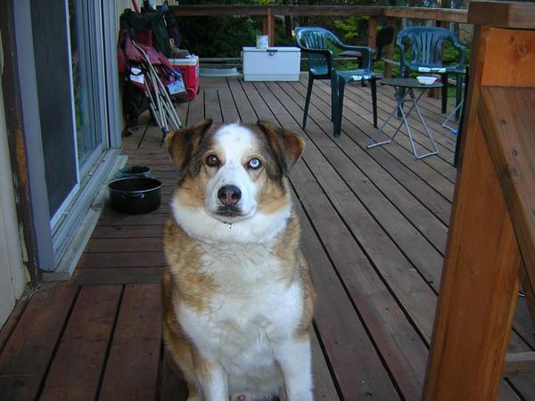 Buddie on the porch by bitemeEdward121719