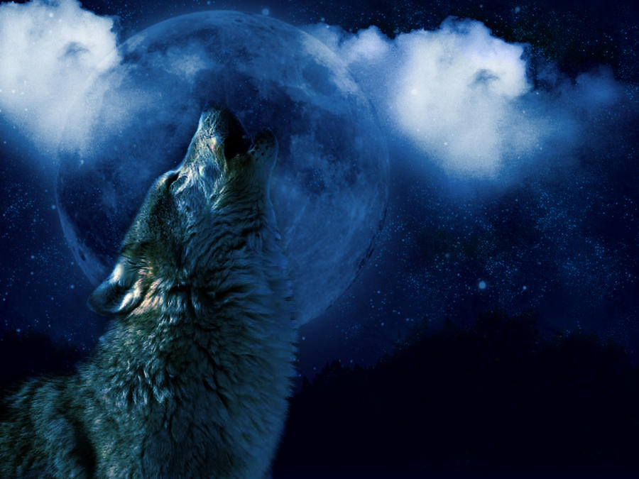 Black wolf howling at moon - photo#17