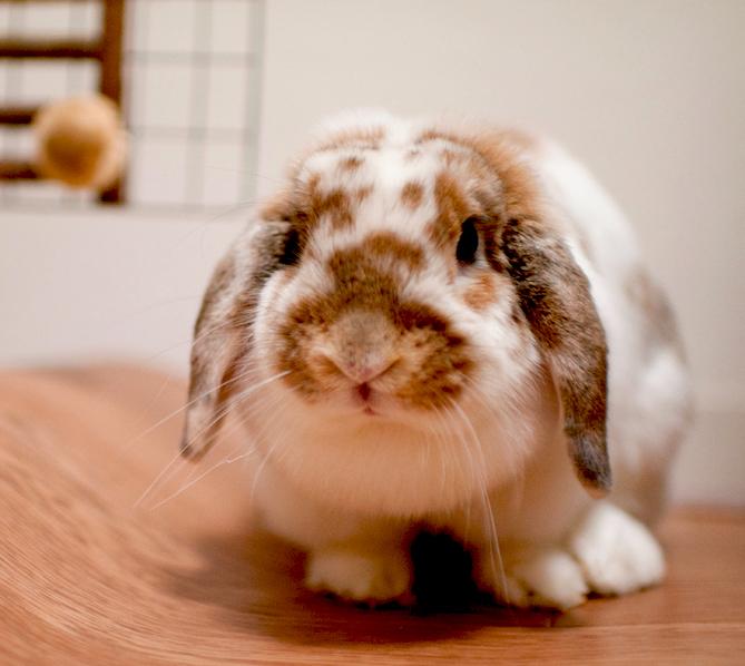 Cute Bunny 2