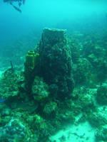 giant vase sponge by GameraBaenre