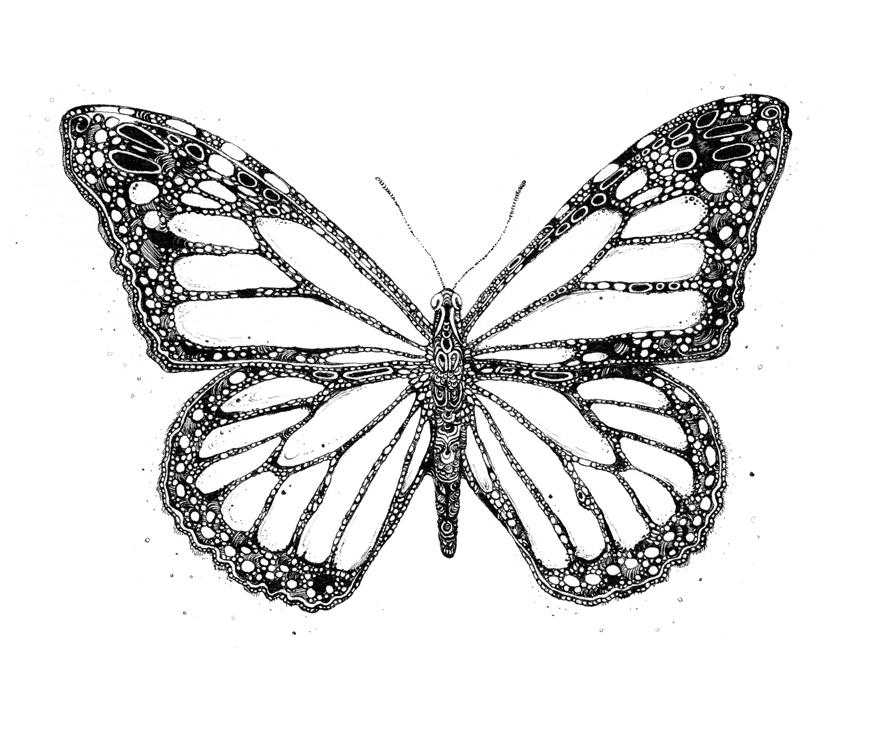 Monarch Butterfly by AllisonStanley on DeviantArt