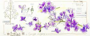 FlowerStudy -Lilac-