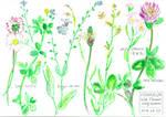 FlowerStudy -summer wild flowers-