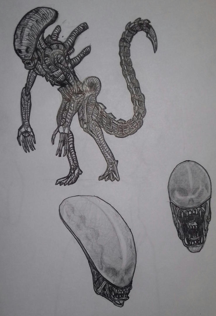 xenomorph sketch by spectra-unknown