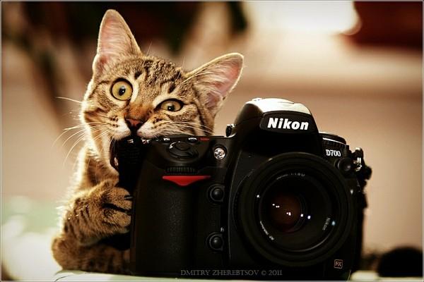 Nikon Camera by KindIyKhan