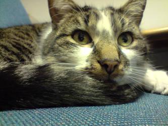 Goldney Cat by djpailo
