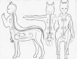 Centaur Anatomy_Nerves n Heart by JEDI-Sheng