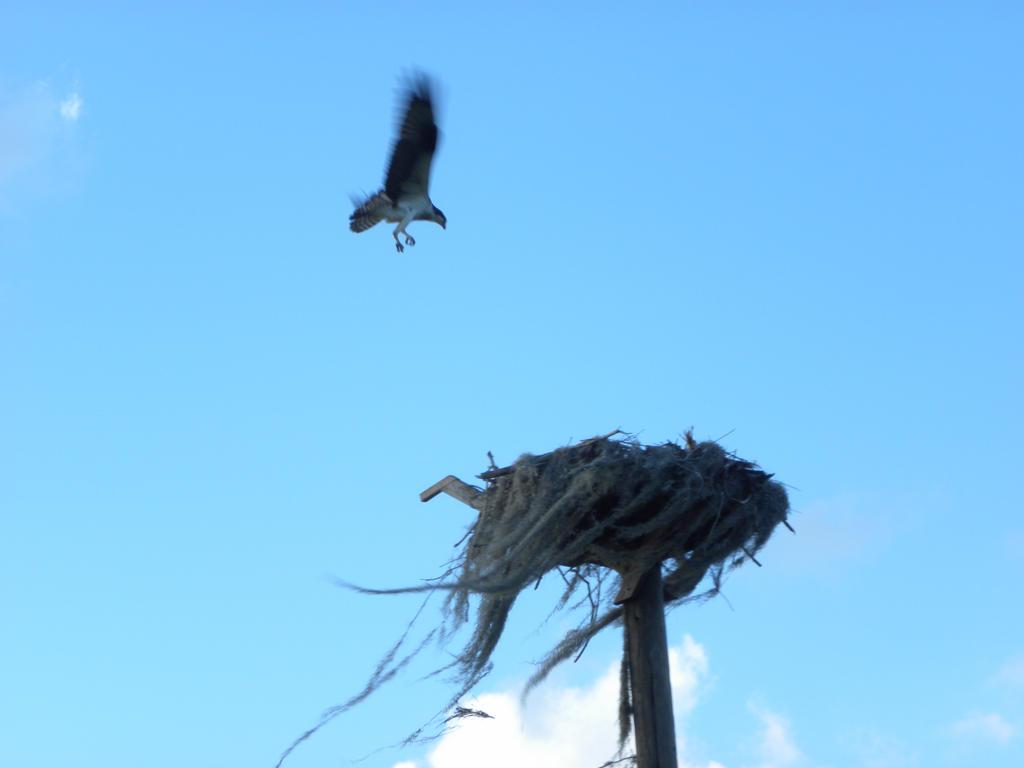 Flying Bird by artsyfartsy