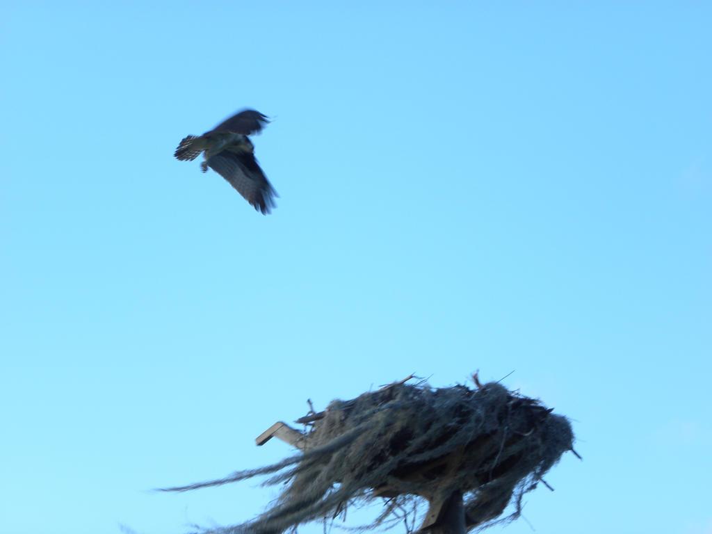 Flying Bird 2 by artsyfartsy
