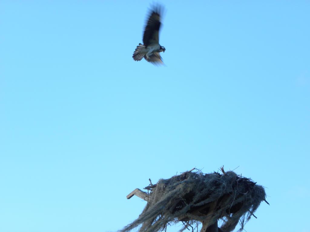Flying Bird 3 by artsyfartsy