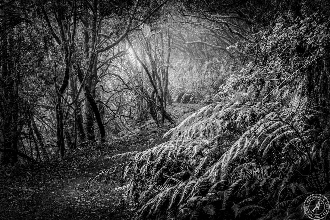 The hiking trail by BlackSunRising