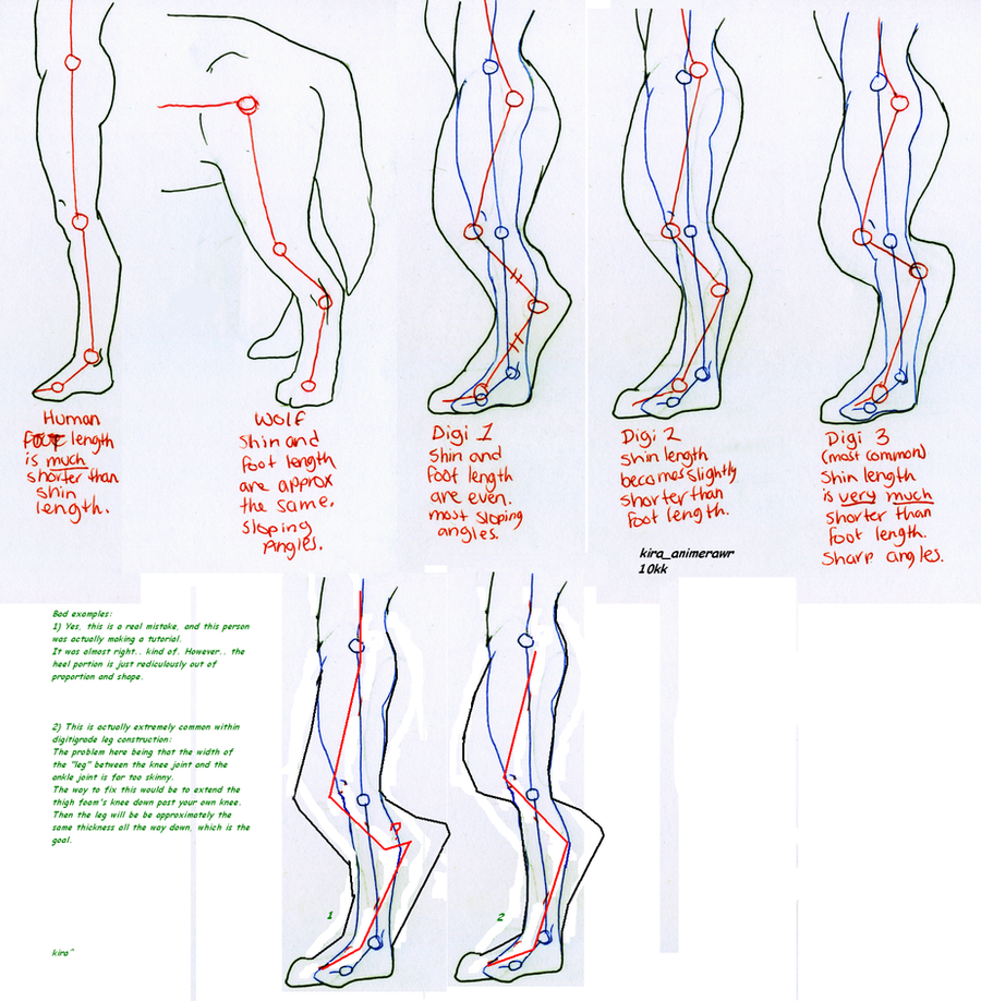 Digitigrade leg foaming proportions study by 10kk