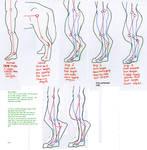 Digitigrade leg foaming proportions study