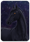 YHH: Horse portrait - SOLD