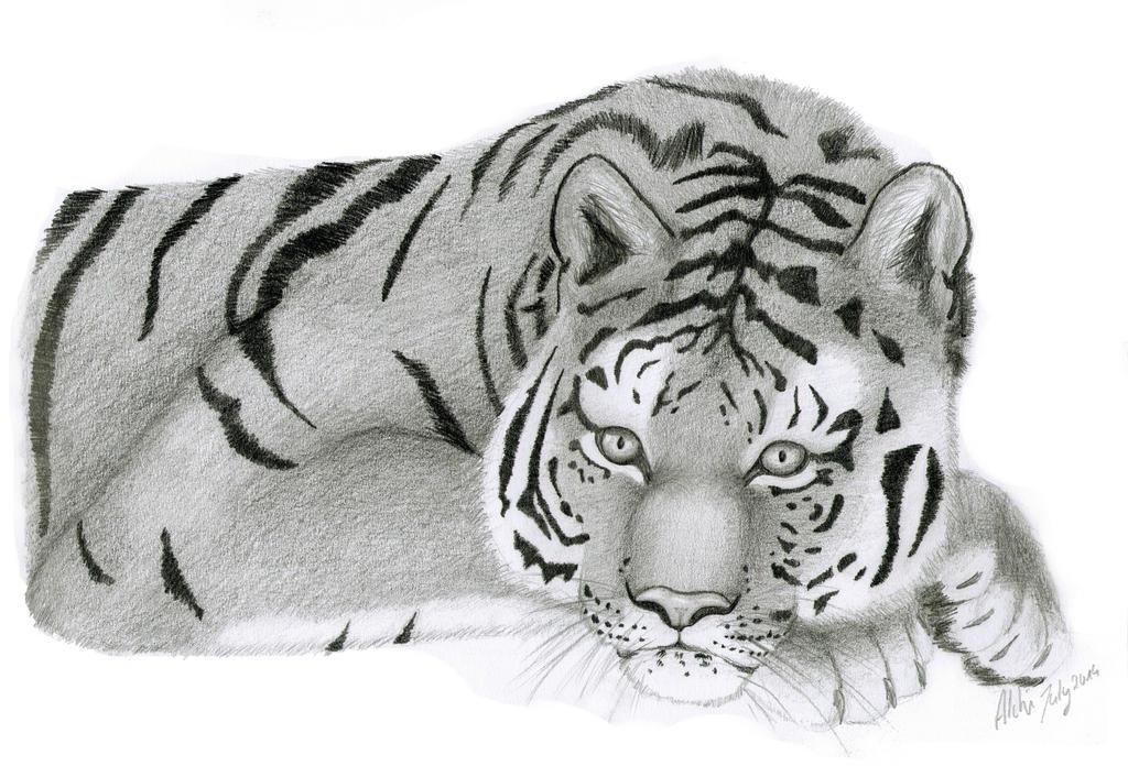 Tiger by der-kleene-Alchemist