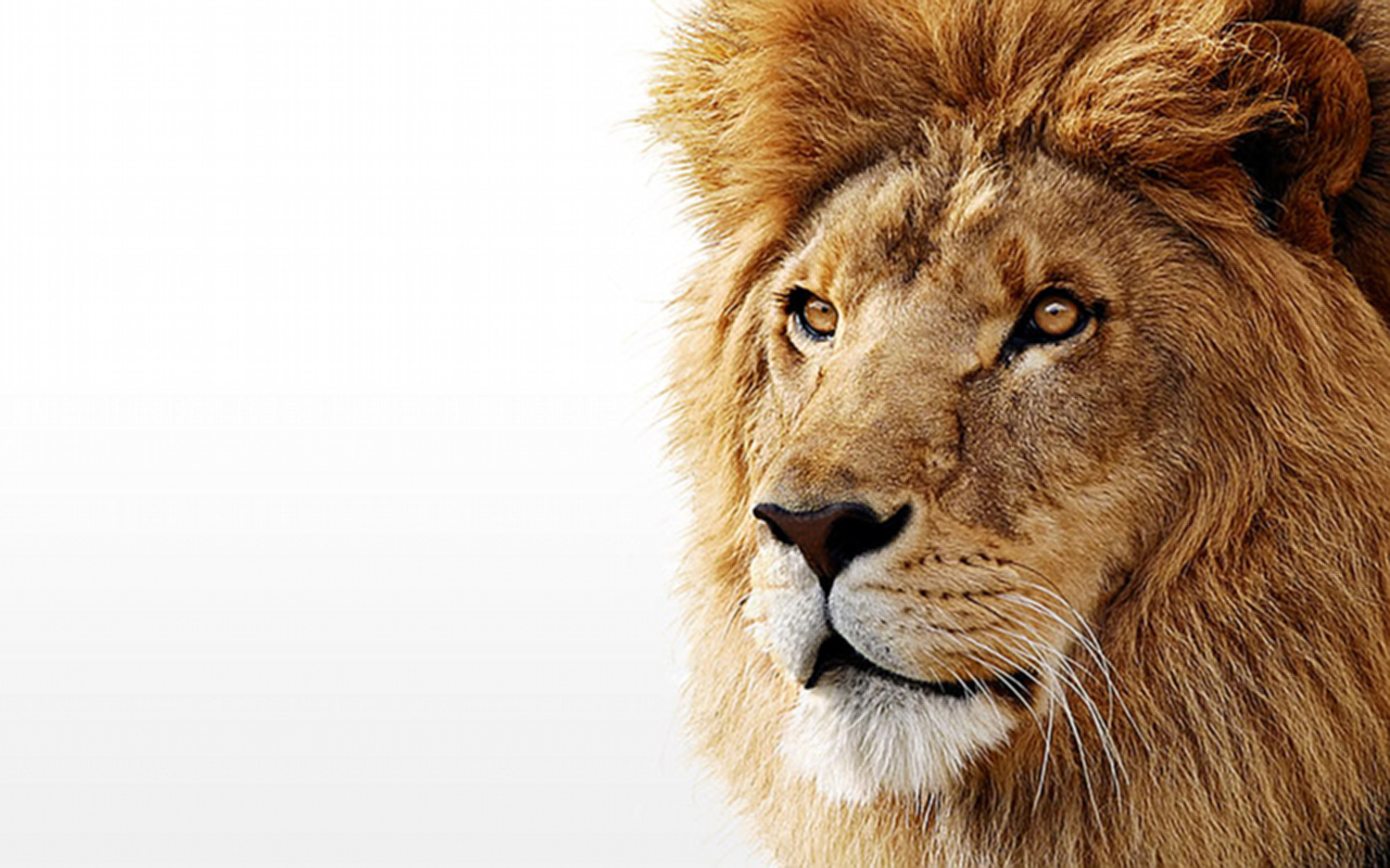 Amazing Wallpaper Mac Lion - mac_os_x_lion_by_moonfire256-d36r4xz  2018_477454.jpg